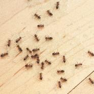 Ants on a piece of wood.